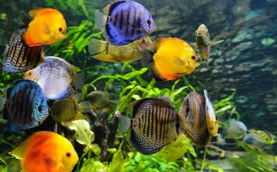 熱帯魚水槽の掃除道具