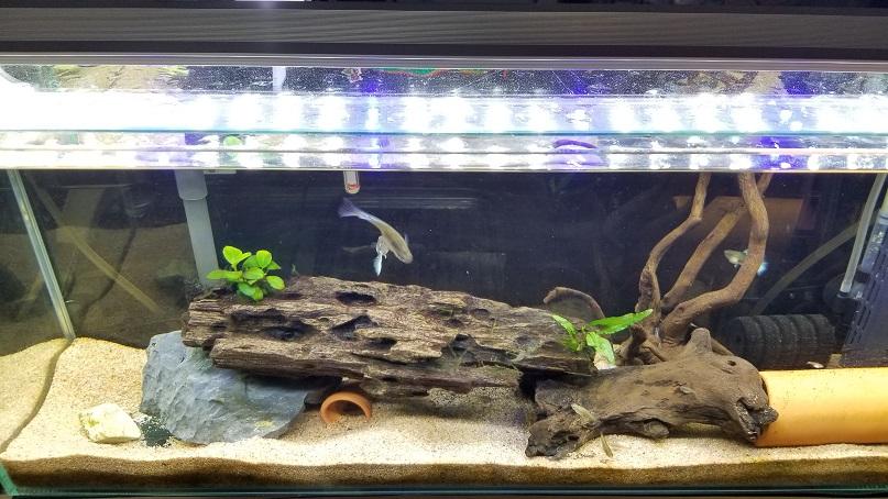 AQQEF水槽照明60cm 水槽ライト B07B8N995J